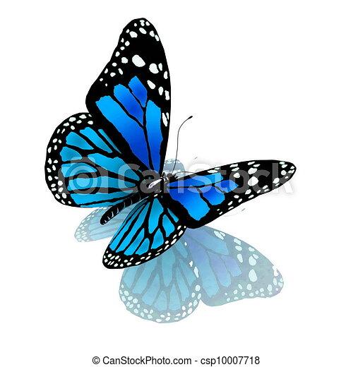 blå, farve, sommerfugl, hvid - csp10007718