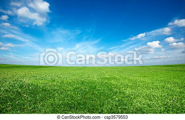 blå himmel, felt, grønne, under, frisk, græs - csp3579553