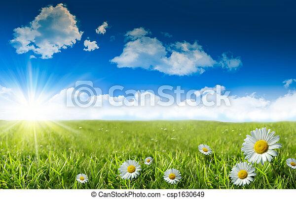 blå, vild græs, himmel, daisies - csp1630649