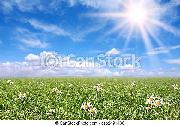 felt, forår, solfyldt, serene, eng - csp2491406