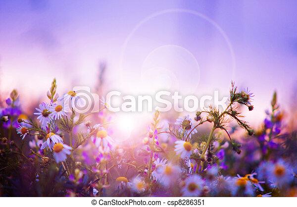 forår blomstrer, felt - csp8286351