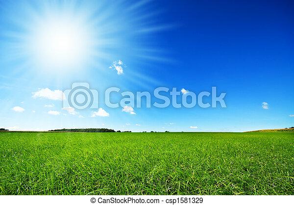 lys blå, frisk, himmel, græs, grønne - csp1581329