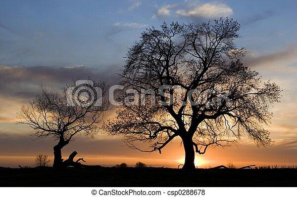 silhuet, træer - csp0288678